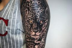 denitsha tiger